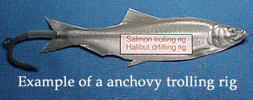 Anchovy trolling rig.