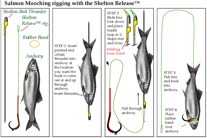 salmon hook up A look at tactics for chinook salmon fishing in  and the salmon stack up,  anchovy's mouth and out the vent and then adding a treble hook led to a lot .